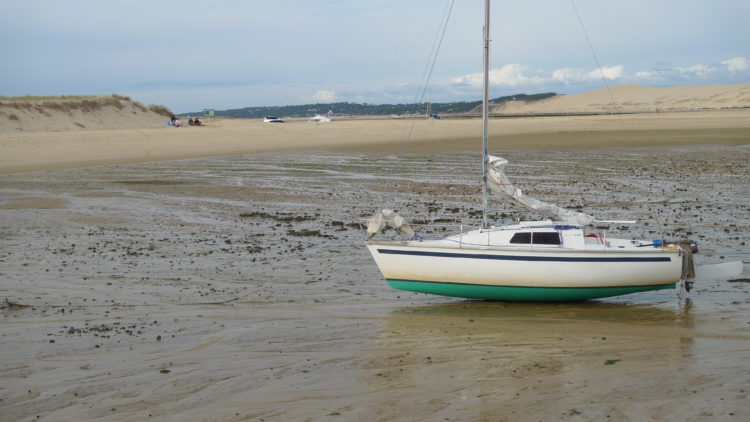 Iboga échoué pour la marée à Arguin
