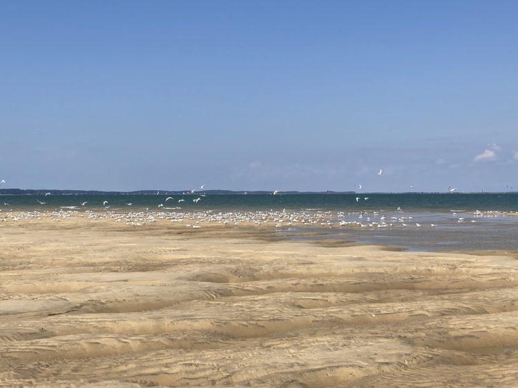 Iboga 1er mai 2021 les sternes ont adopté le banc