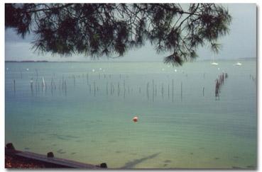 Le Bassin vu de la terasse de l'Esteyrot